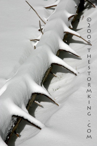 Nugget #156 E Snow spikes on fallen tree