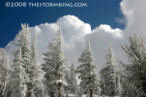 Nugget #156 F Cumulus towers over pine trees