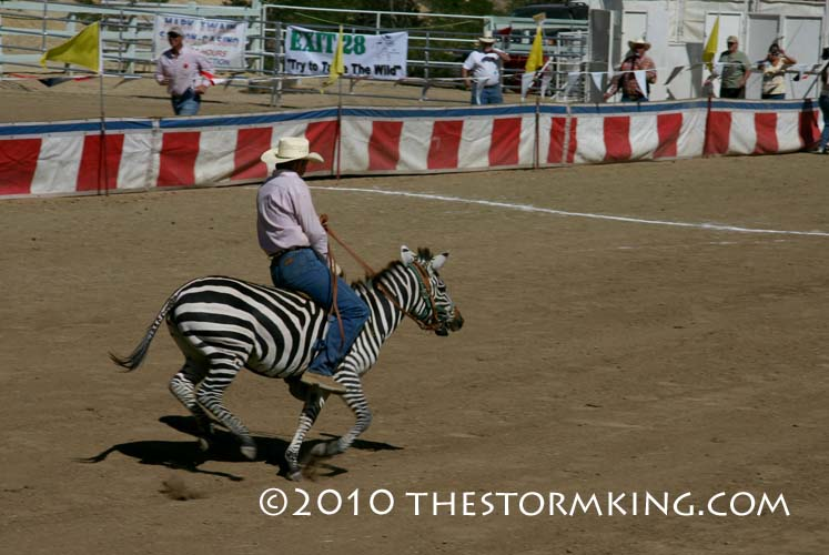 5 Nugget #190 Riding a Zebra