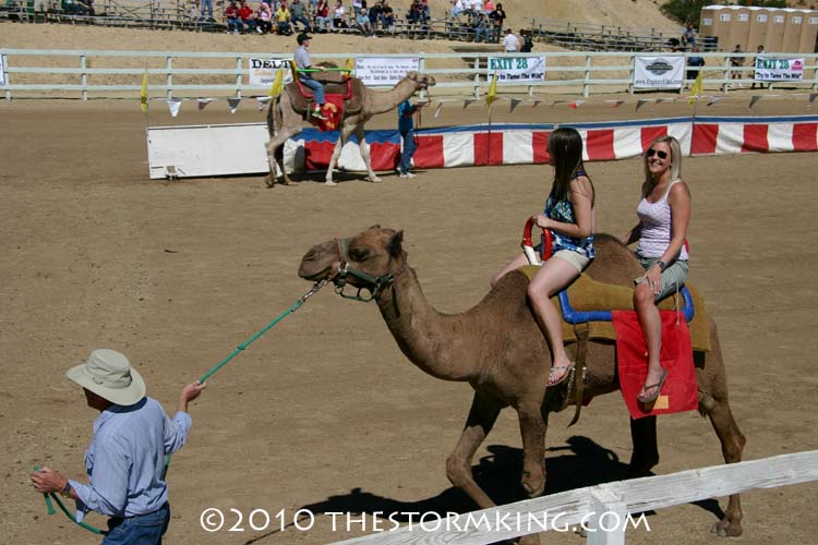 8 Nugget #190 Camel Rides for 5 Bucks