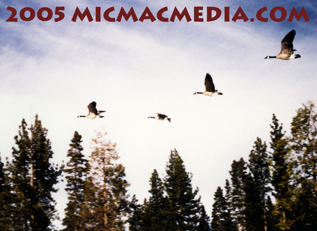 Nugget #21 Geese in flight ID and resized