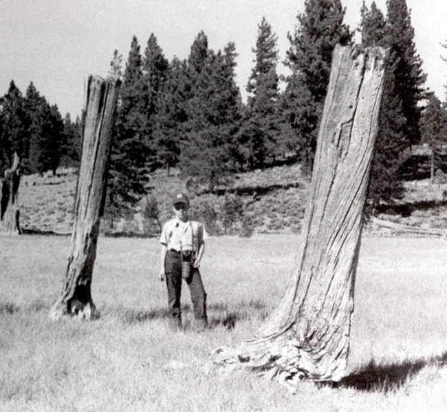 Nugget #44 A Tree stumps man scale Alder ppt. 850