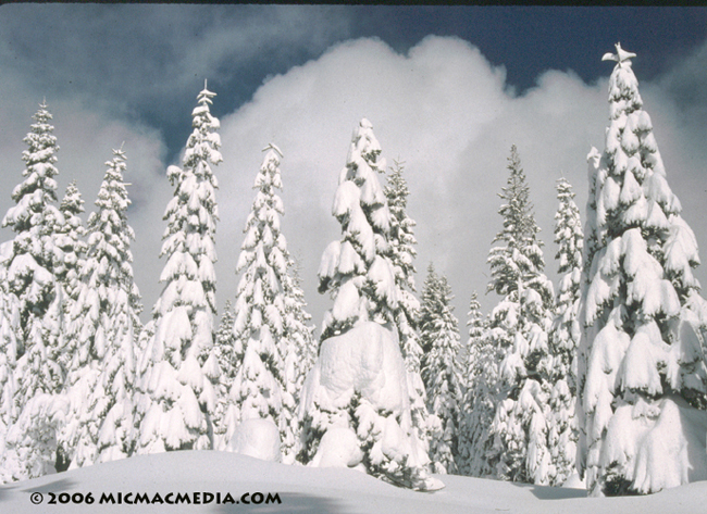 Nugget #55 B Snow covered trees000-01